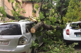 copac pe masina