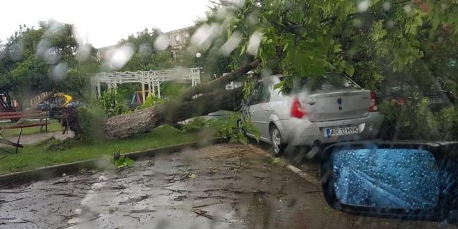 furtuna copac cazut